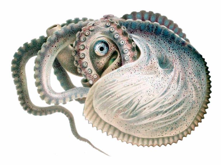 """È """"italiano"""" il campione mondiale dei molluschi"""