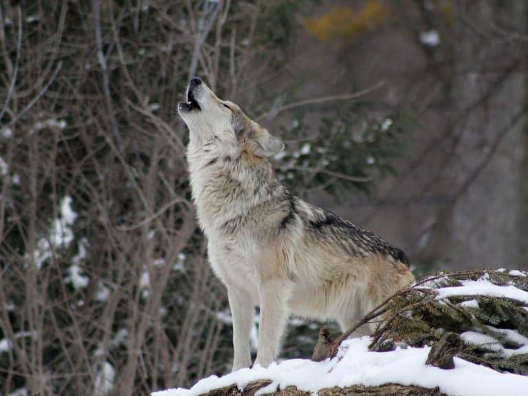 Gli animali selvatici hanno diritto al proprio habitat