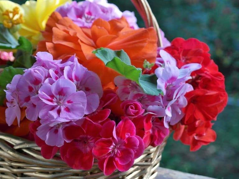 Metti i fiori nel tuo basket