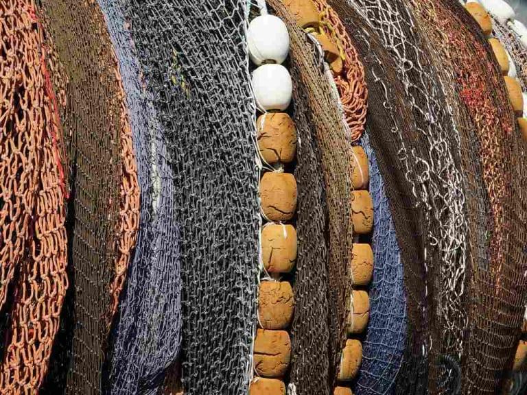 Pesca sostenibile: usi e abusi. Così il pesce ci finisce nel piatto