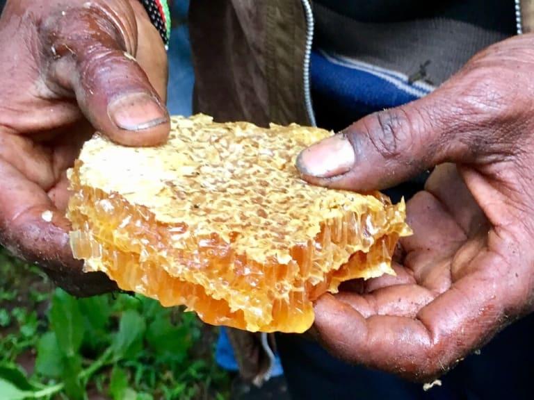 Pastori d'api: così l'apicoltore salva il mondo