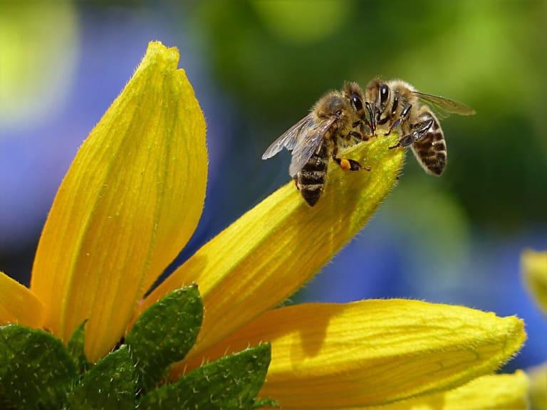 Le api assicurate contro i cambiamenti climatici