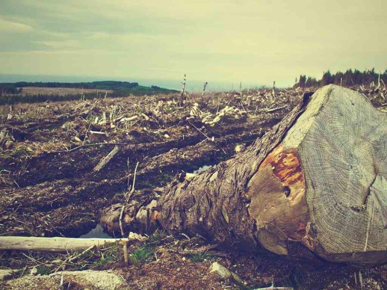 Reati ambientali, i colpevoli non possono più farla franca