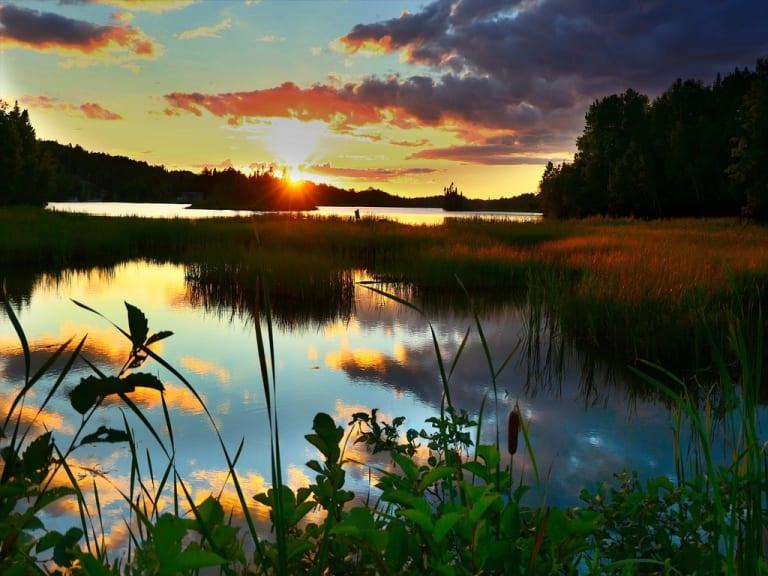 5 giugno giornata dell'ambiente, guariamo la natura per stare bene