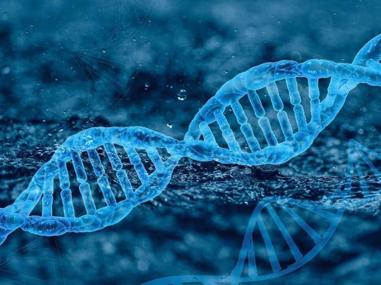 Biotecnologie in circolo: la teoria dei codici che può aiutare il settore