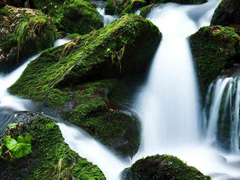 I fiumi respirano, parlano e si lamentano