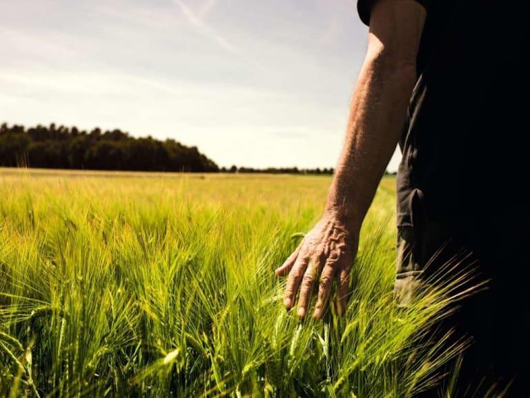 Agricoltura: Covid non ti temo, o quasi