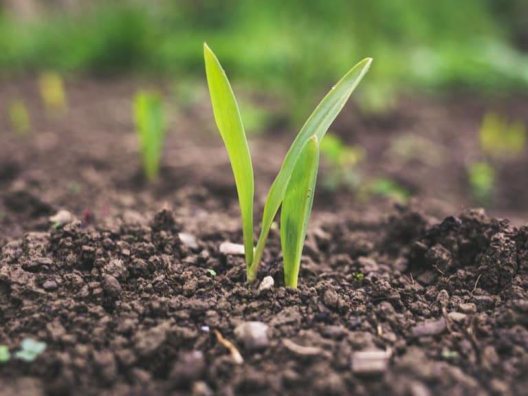 Yara entra nel mercato del biologico e della sostenibilità con Nature