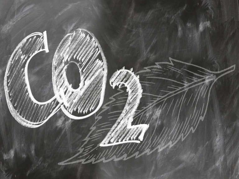 Difendere la natura comprando l'anidride carbonica