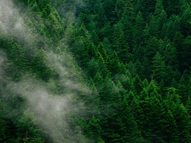Servono sistemi di cattura della CO2, piantare alberi non basta più