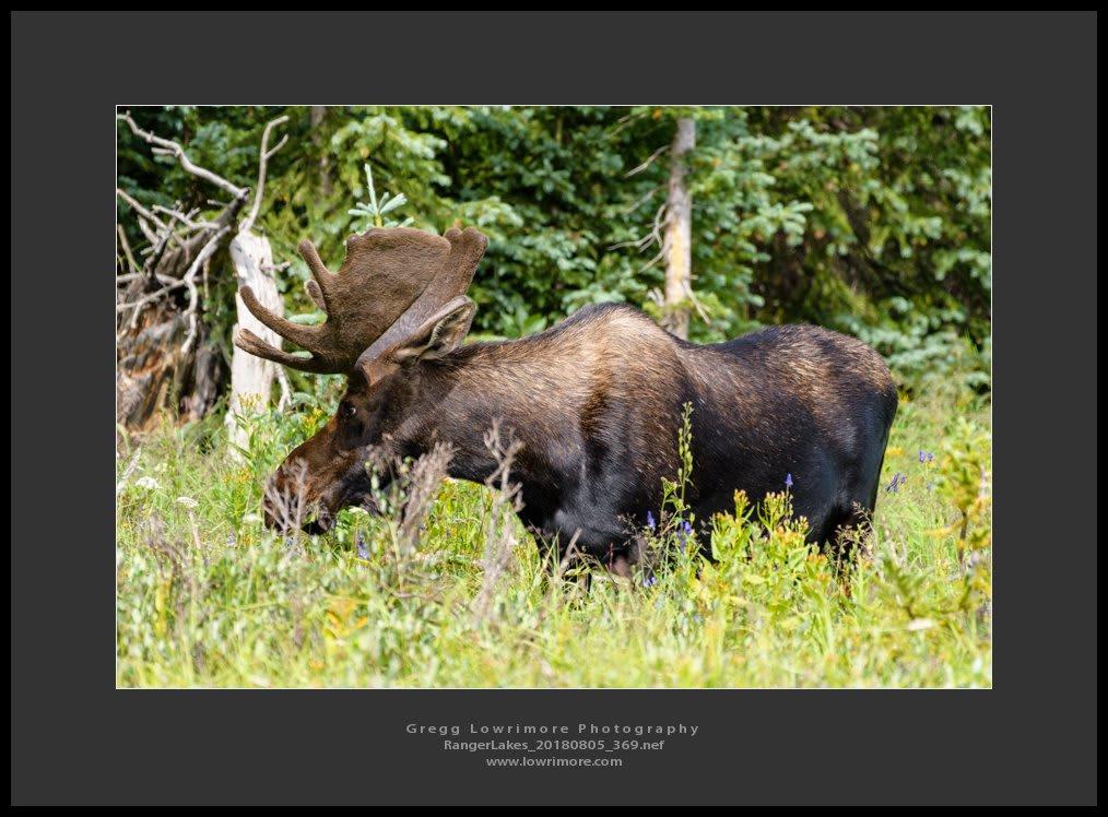 Moose - Ranger Lakes 20180805 369