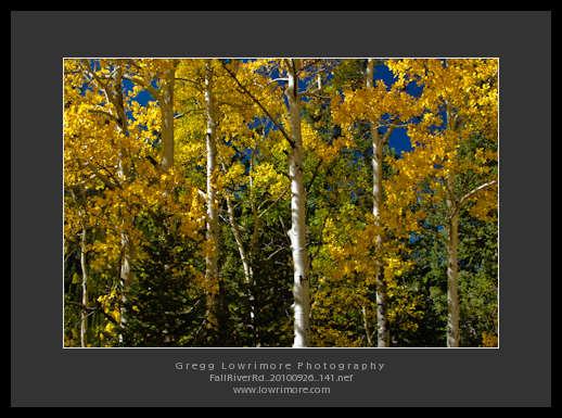 Fall River Rd 20100926 141
