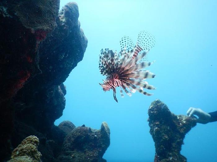 Vida marinha - mergulho