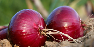 When Onion Prices Bring Indians to Tears | Gro Intelligence