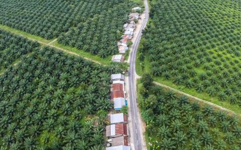 Palm Oil: Growth in Southeast Asia Comes With A High Price