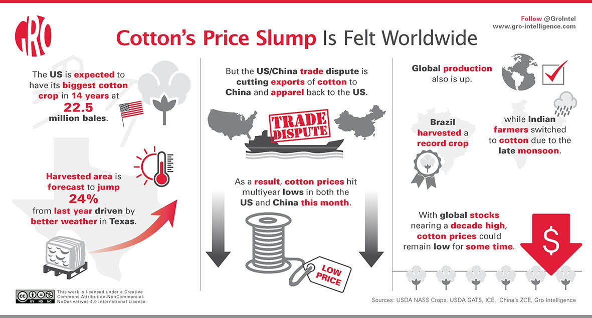 Cotton Prices Unravel Under the Weight of Excess Supply