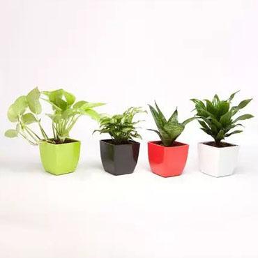 Plant Combo 2