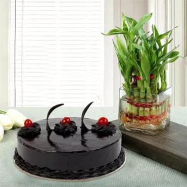 Plant Chocolate Cake Combo