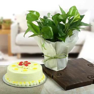 Plant $ Cake Combo