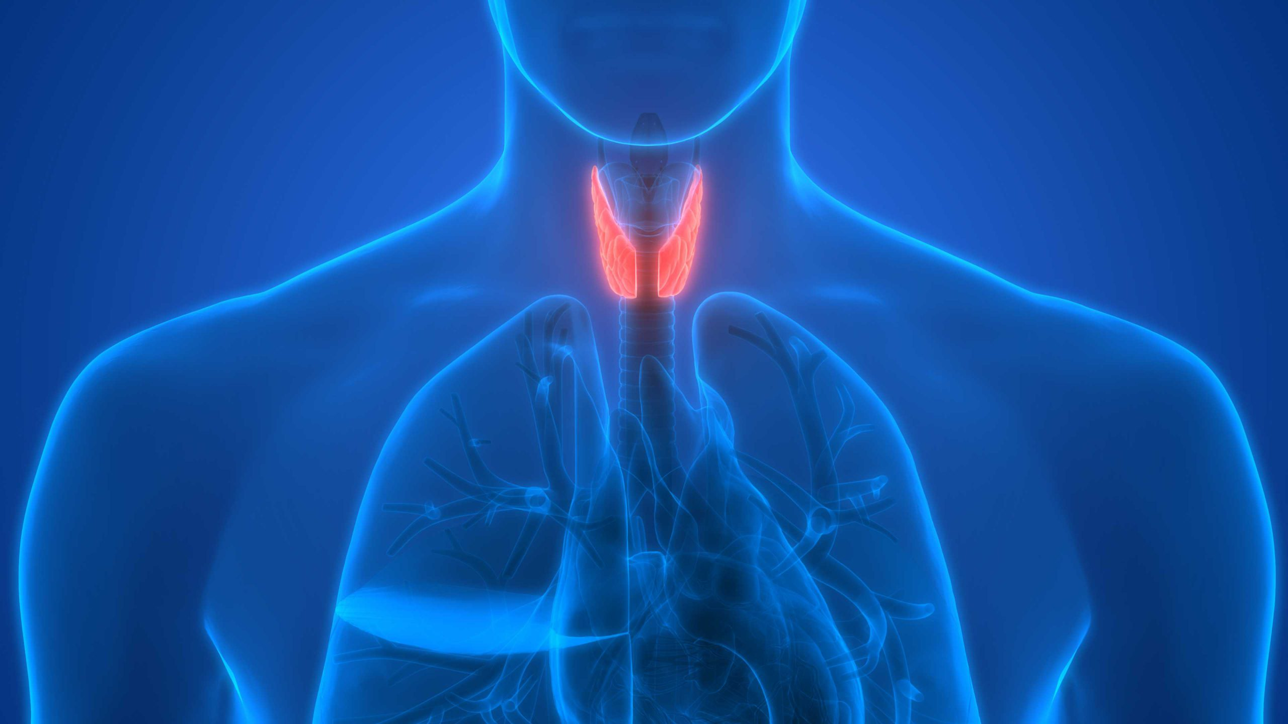 Thyroid Disease And Diabetes What Does The Thyroid Do