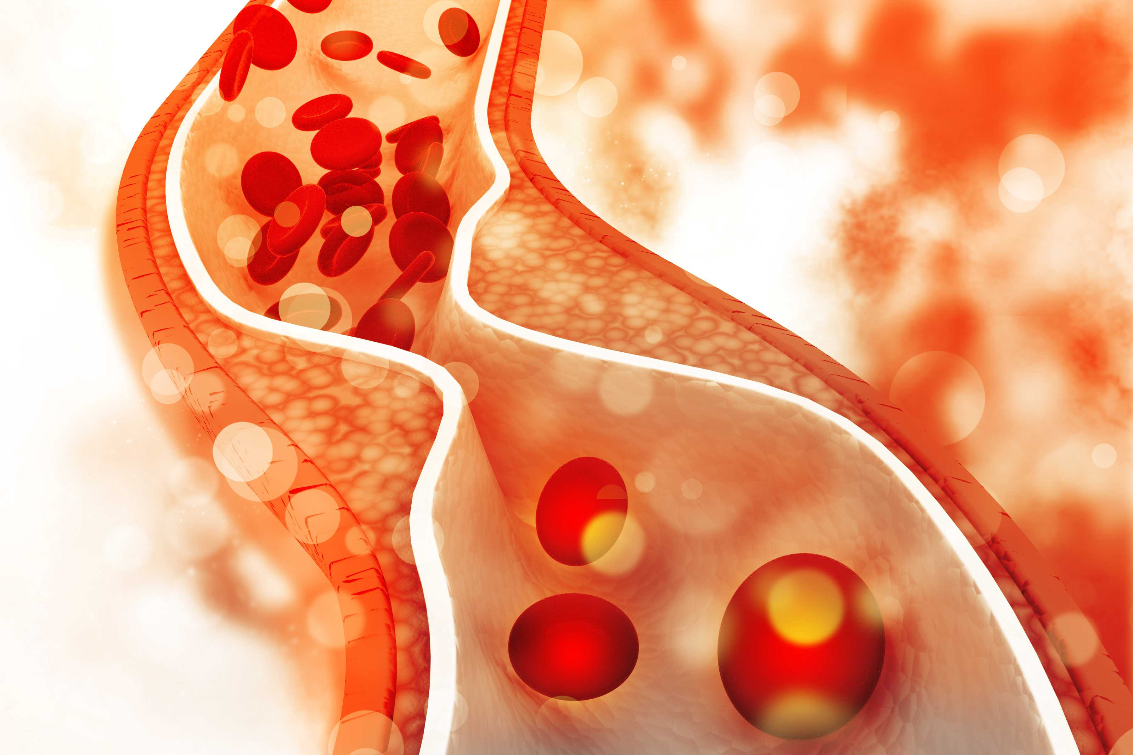 Cholesterol – Cholesterol's Role in the Body