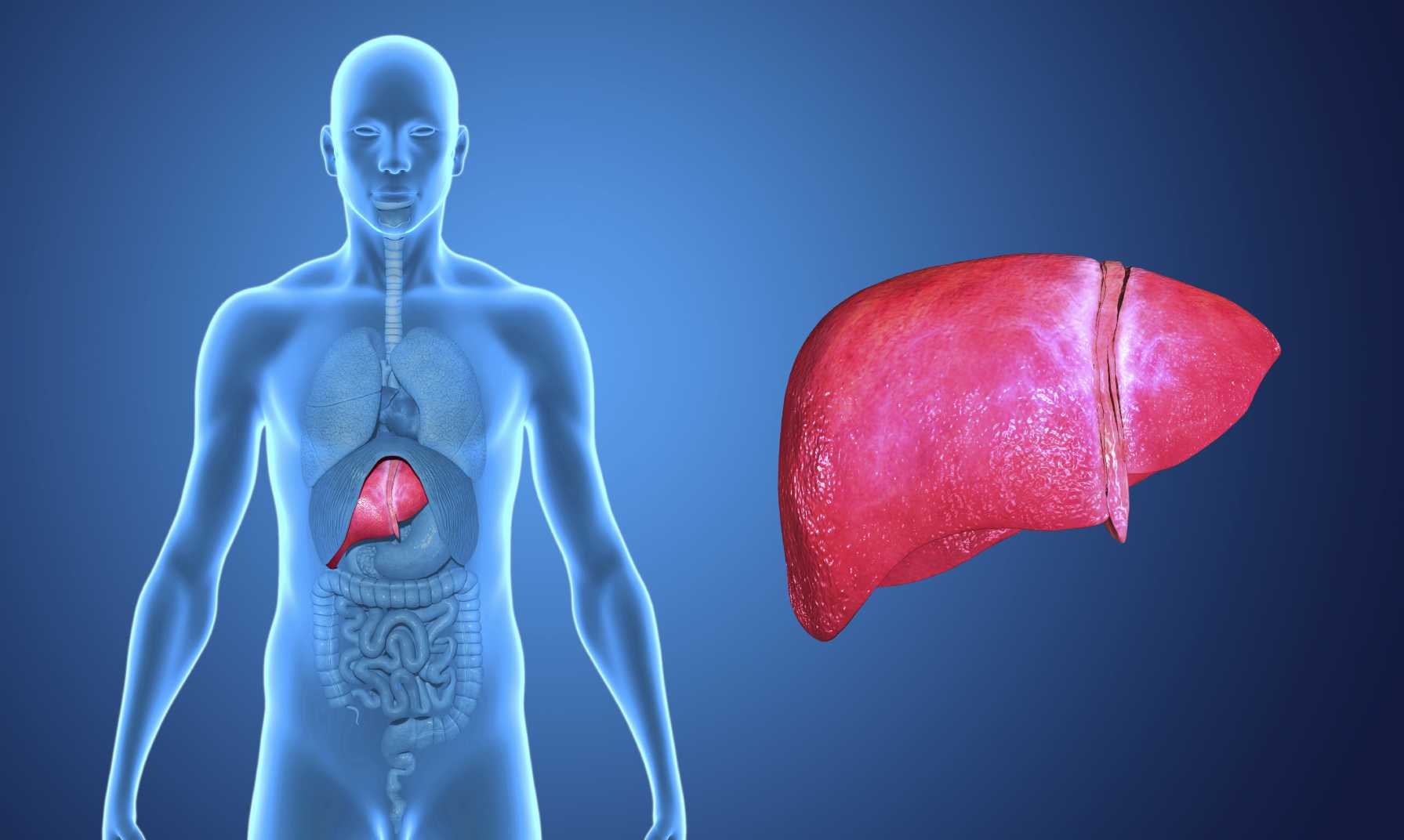 The Liver and Diabetes