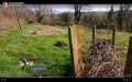 Screenshot of livestreaming from the forest garden, view of dead hedge