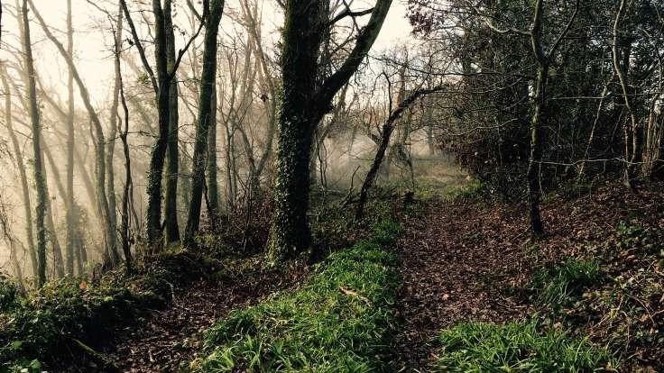 Path through misty trees