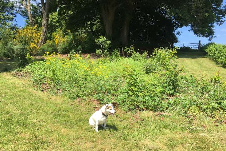 Small white dog in front of sunny green plant bed, with dark trees in background