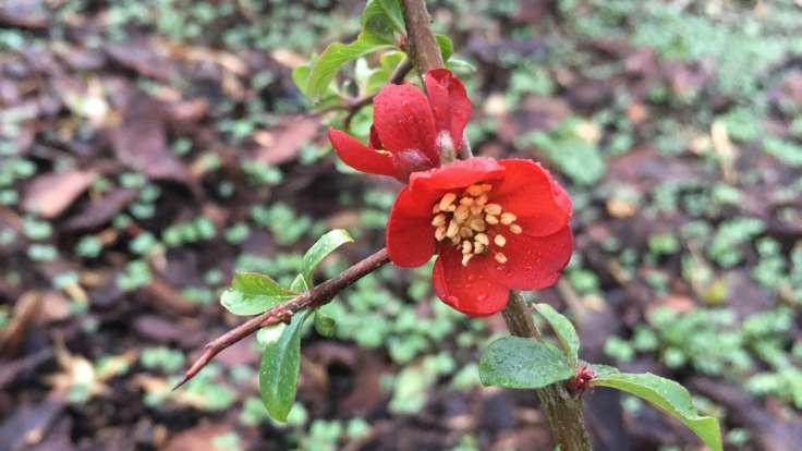 Red flower on spiky branch