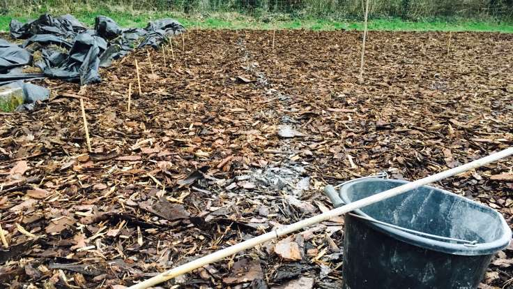 Bark mulch covered area, bamboo markers, faint line of ground lime