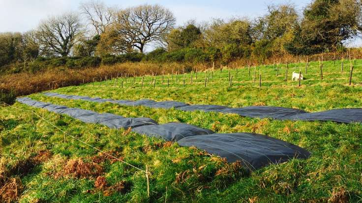 New rows of coppice trees with two rows of sheet mulch in the foreground