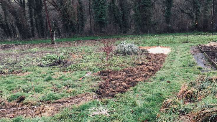 Freshly deturfed and mulched side of an existing bed, next to raised beds