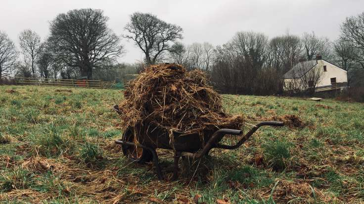 Old wheelbarrow full of rotting hay in a field
