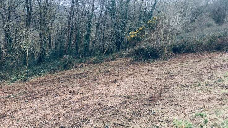 Recently cleared bramble from sloping field next to wood