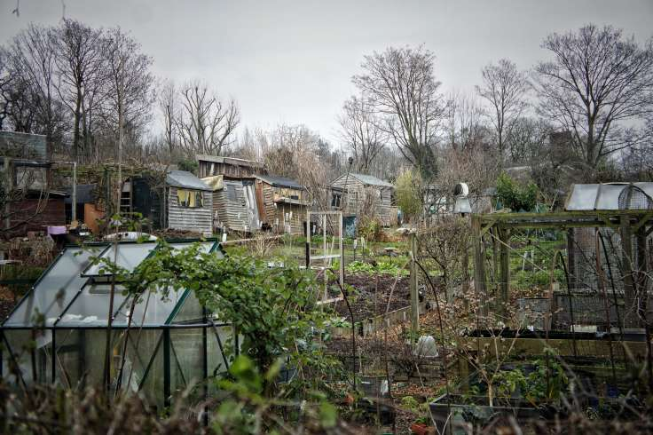 Allotment in winter with ramshackle buildings