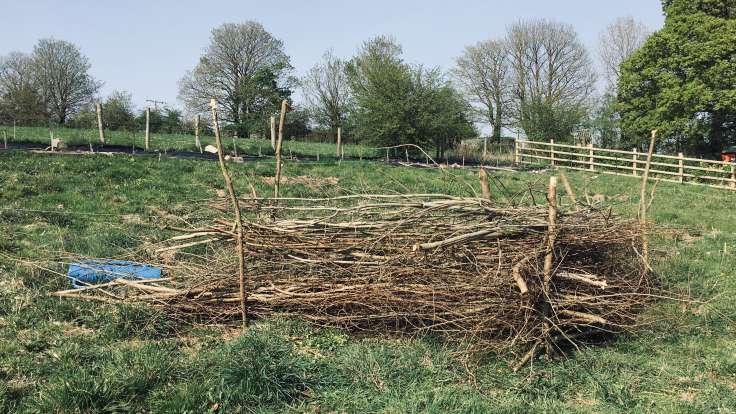 Dead hedge in field, made out of posts and old branches