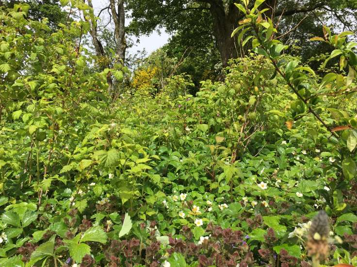 Bundle of green plants in a mixed up bed of fruit