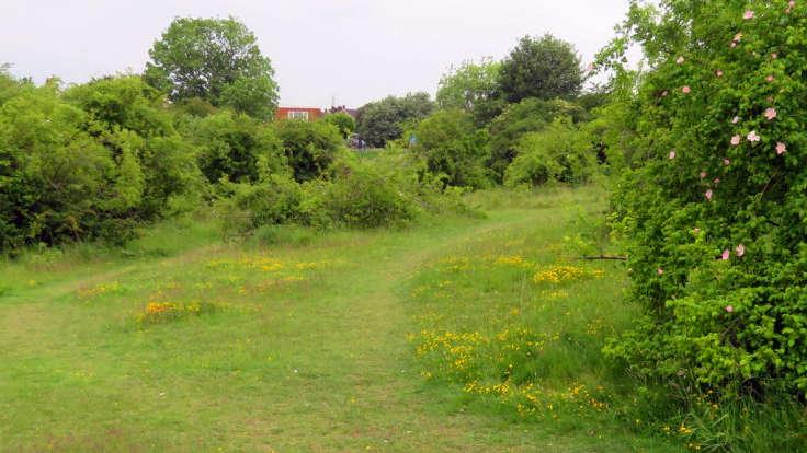 Scrubland, grass paths, wild flowers, house through trees