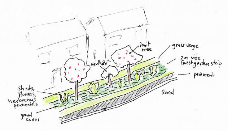 Sketch of strip of forest garden on grass verge