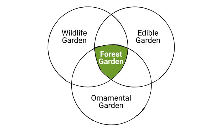 Hand-drawn Venn diagram. Ornamental garden, vegetable garden & wildlife garden in circles, forest garden in intersection.