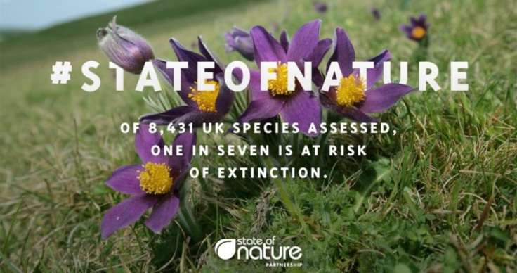 Cover image for State of Nature report 2019