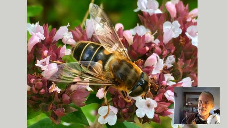 Screenshot of slideshow, big photo of hoverfly, small square with smirking face