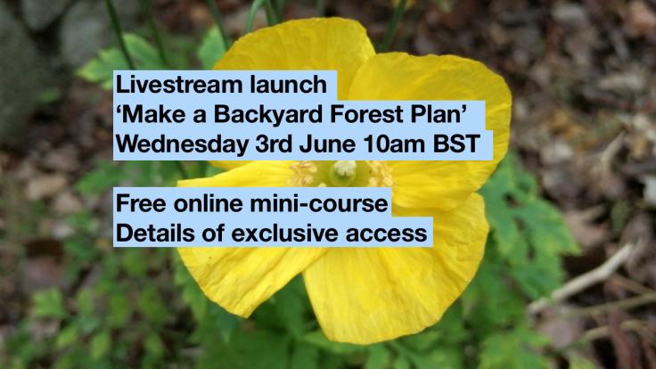 Screenshot of livestream text over photo of yellow poppy