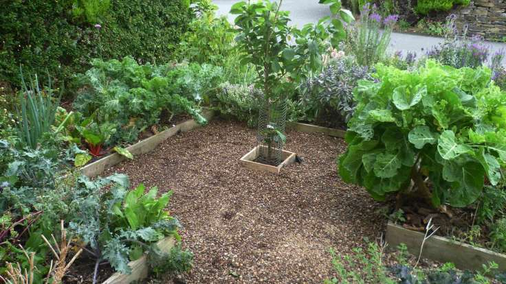 Small edible forest garden, wooden planks and woodchip paths