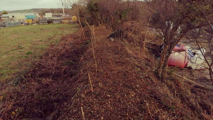 View along top of a bank with newly planted hedge