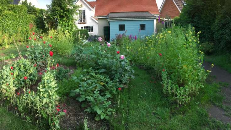 Beds with flowers in front of shed at back of house