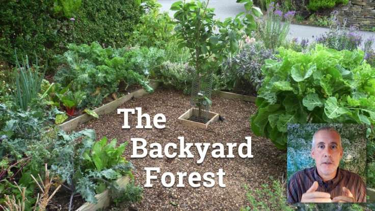 Small front forest garden with text 'The Backyard Forest'
