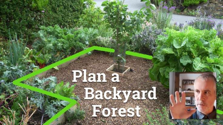 Small front forest garden with lines and text 'Plan a Backyard Forest'