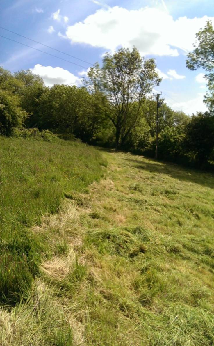 Half mown field in the summer